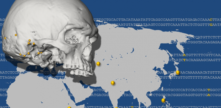 Article: Association of cranial anatomy and genomic variation in modern humans